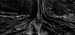 土台力の木